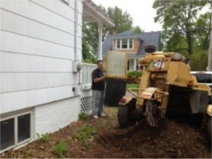 Stump Removal Hamden, CT