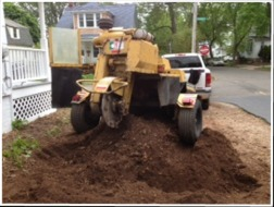 Stump Removal, Stump Grinding, Tree Removal Services | Hamden, CT