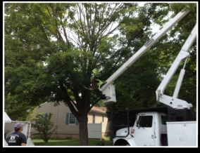 Tree Removal Service - Milford, Woodbridge, Orange, CT