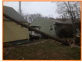 Emergency Tree Removal - Storm Damage Cleanup | Madison, Orange, Milford, CT