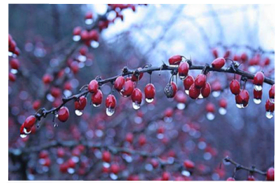 Winter Plants - Affordable Landscape and Tree Services - Hamden, CT
