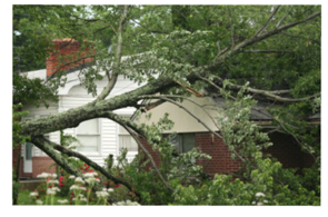 Affordable Landscape and Tree Service - Emergency Storm Service