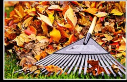 Fall Cleanup Services - Affordable Landscape and Tree Service LLC - Hamden, CT