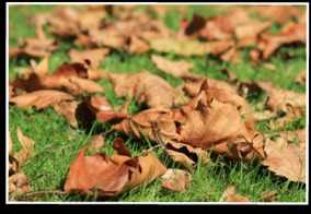 Fall Landscape Clean Up Services, Rake Leaves, Yard Debris Removal | Hamden, CT