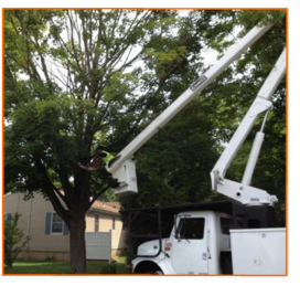 Tree Removal Service - Affordable Landscape and Tree Service - Hamden, CT
