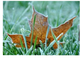 Winter Lawn Preparation - Hamden, CT - Affordable Landscape and Tree Services, LLC.